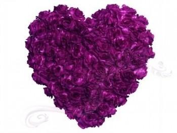 Srdce plné  fialové