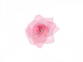 Růže 731191213